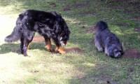 Rudi und Bach 2009, eigenes Foto, Lizenz: CC by