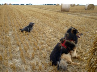 Phex and Rudi pose with round straw bales. Own photo, licence: CC by-SA/ Creative Commons Attribution-Share Alike 3.0 Unported