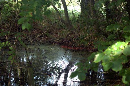 Pond off Deadman's Lane
