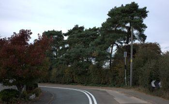 The famous Scott's Pines