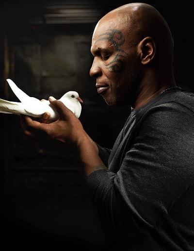 Майк Тайсон. Биография боксера. Карьера и личная жизнь. Фото