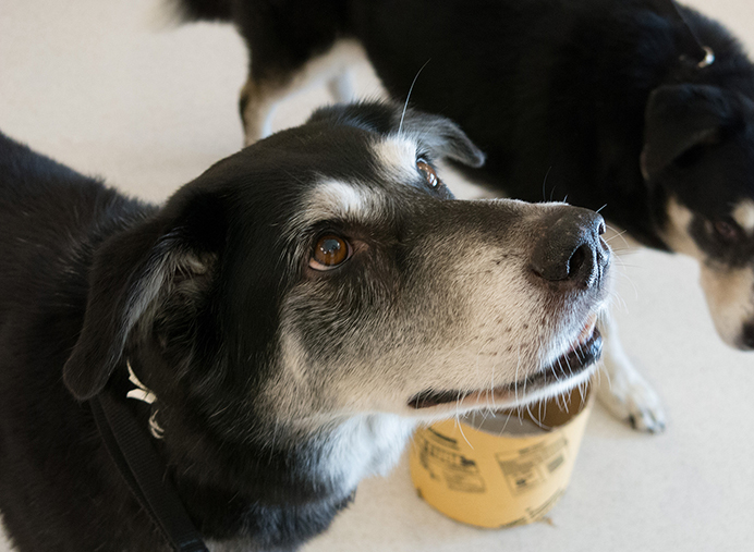 Last year, nearly 2,000 people contributed time and talents to helping animals at the Oregon Humane Society. (Judy Nelson)