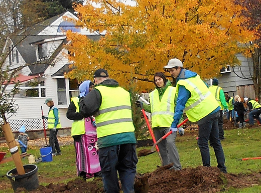 More than two dozen Roseway neighbors turned out on a rainy Saturday morning in late October to plant 15 more trees on the Roseway Parkway. The work part was part of a multi-year project to gradually replace aging plum trees that are more than half a century old with mostly evergreens that will last more than a century. (Phill Colombo)
