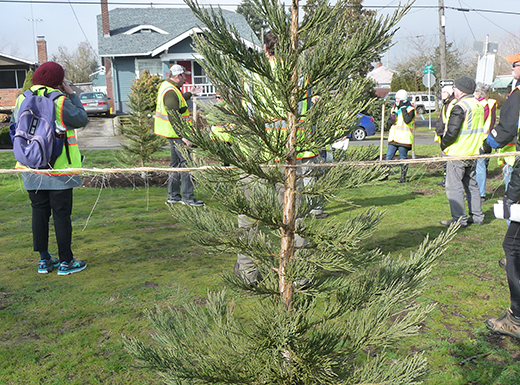 Roseway Tree Team puts down roots on 72nd Ave. park blocks