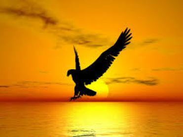 eagle freedom