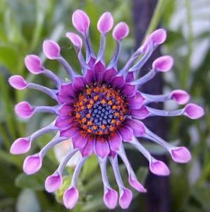 flower beauty 22 petals_n