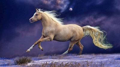 white-horse-1