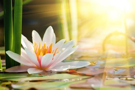 let-liberty-lotus