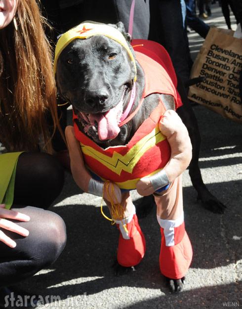 PHOTOS Top 10 dog costumes at 2011 Tompkins Square Park