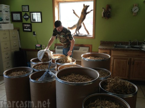 Image Result For How Many Ginseng Roots Make A Pound