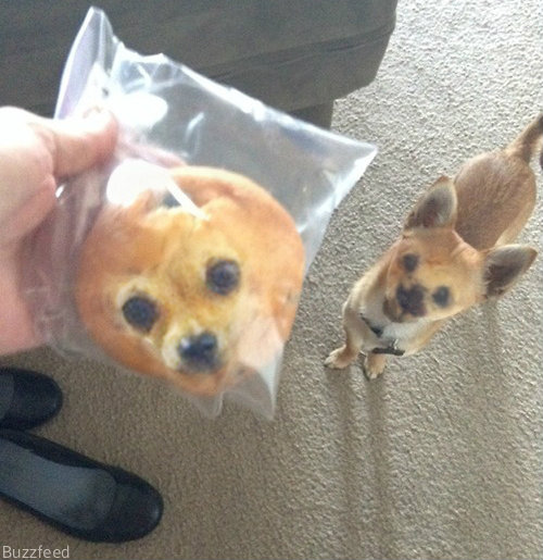 kitchen runner ninja mega 1500 photos this chihuahua looks just like a blueberry muffin