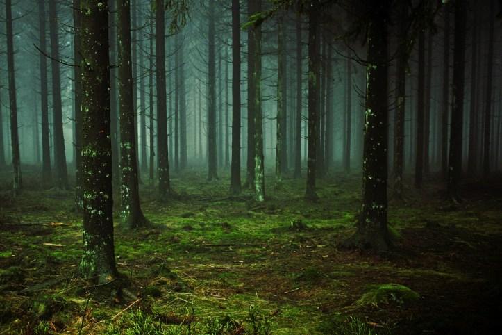 gloomy green forest november horoscopes