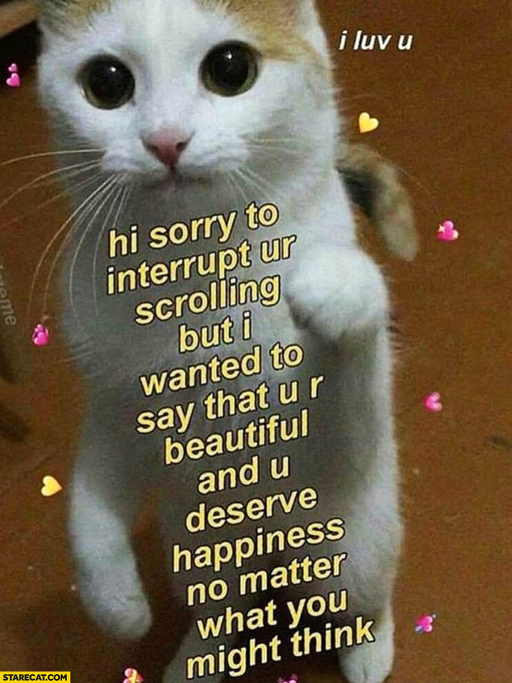 Cute Cat Kitten Hi Sorry To Interrupt Your Scrolling But I Wanted To Say That You Are Beautiful And You Deserve Happiness No Matter What You Think Starecat Com