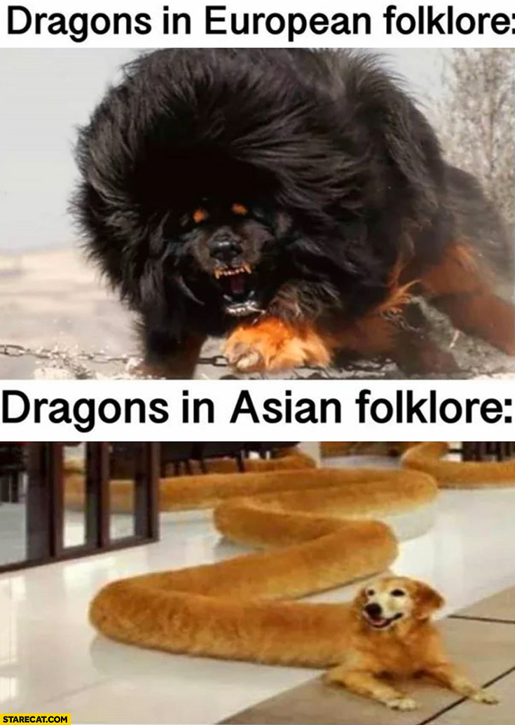 Asian Dog Meme : asian, Dragons, European, Folklore, Asian, StareCat.com