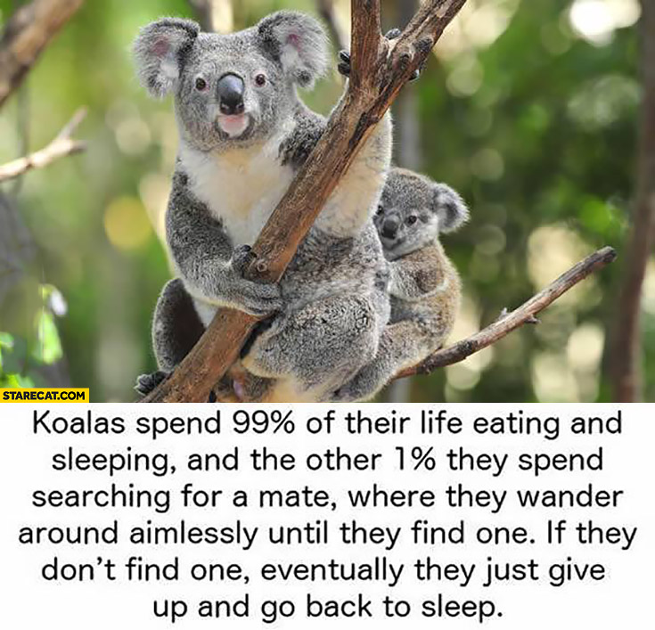 Koala Kids Shoes