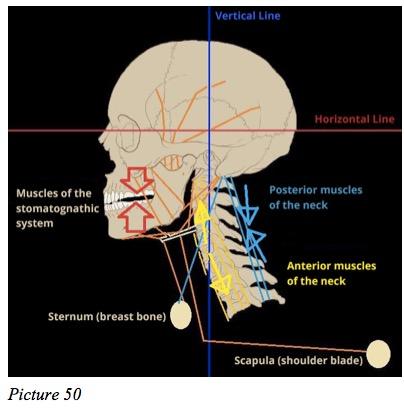 Stomatognathic lever effect