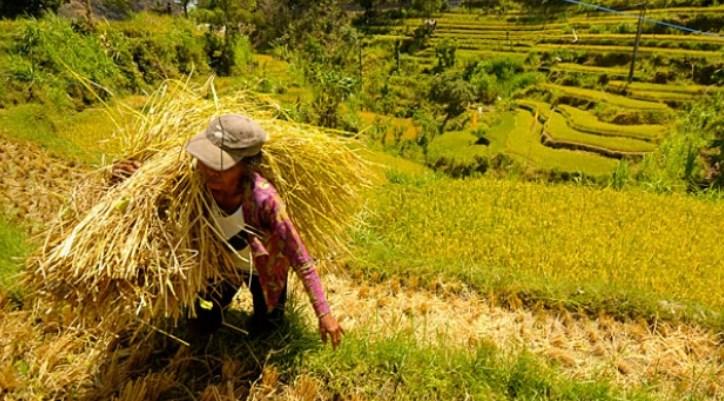 Indonesia Lumbung Pangan Dunia 2045