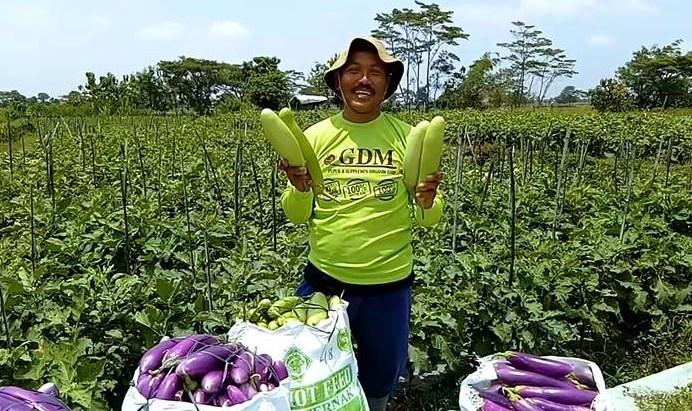 tanaman organik indonesia