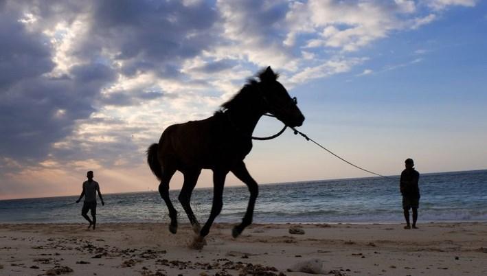 jenis kuda pacu indonesia
