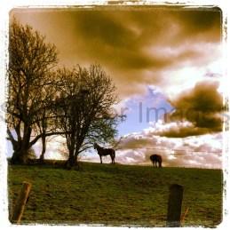 Kent countryside, UK 006