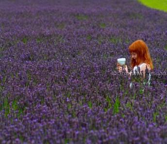 Lavender fieldIMG_2672_1024