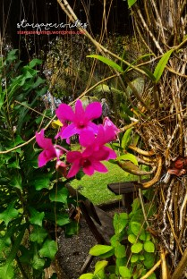 orchid