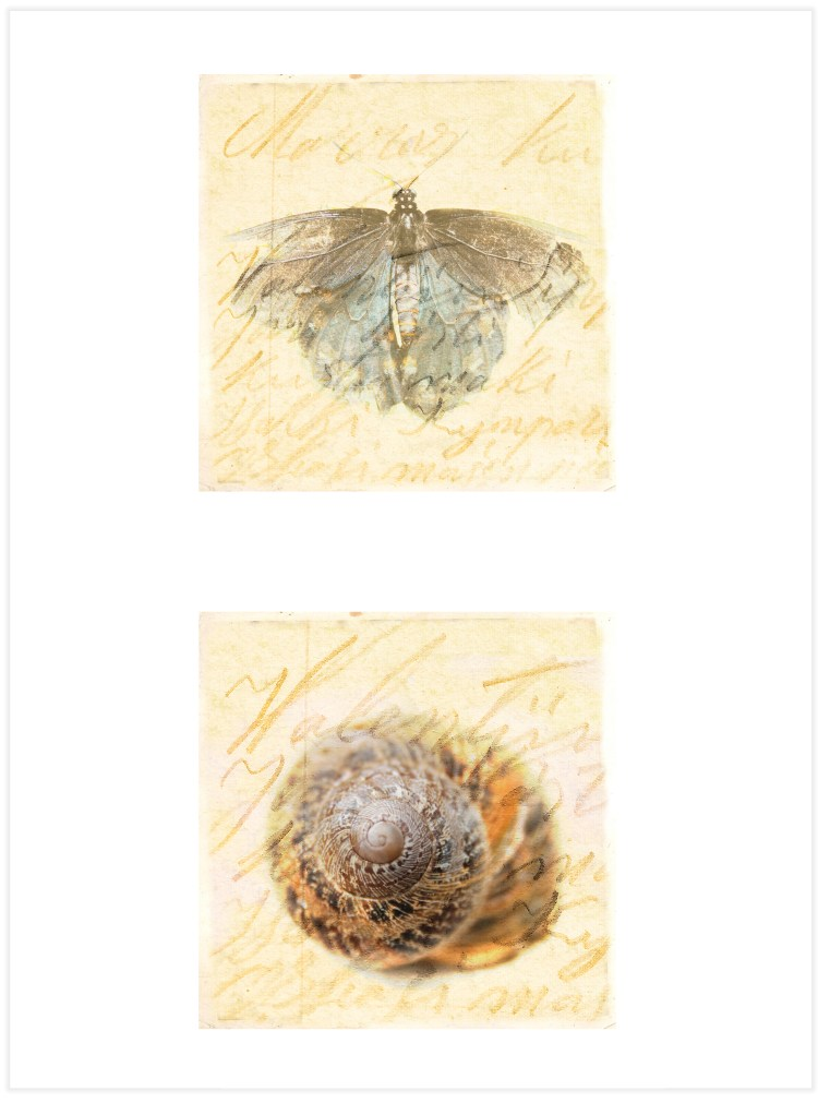 snail and butterfly art
