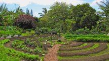 Permaculture Farm Garden
