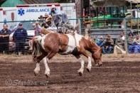 Ketchum Kalf Rodeo 7297
