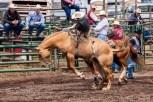 Ketchum Kalf Rodeo 7310