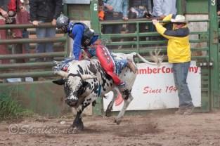 Ketchum Kalf Rodeo 7927