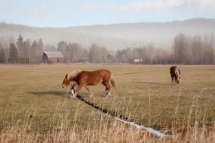 TL-Horses_2744