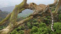 Rwanda Wildlife And Nature - Starmount Safaris