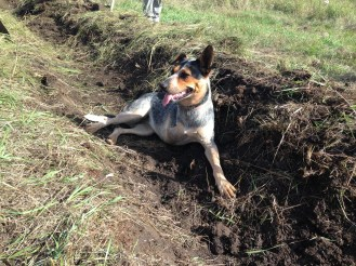 A three-legged dog in a swale, of course