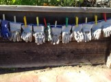 Gardening Gloves Clothesline- ready and waiting for small hands!