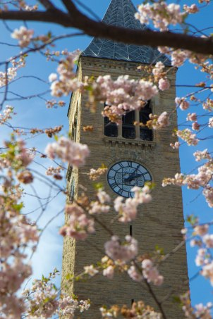 """Revisiting my alma mater during cherry blossom time. """"High above Cayuga's waters..."""""""