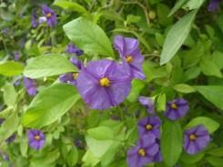 Flowerly love