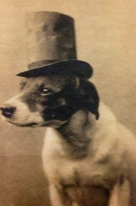 Dog in top hat, from East End of London circa 19th Century