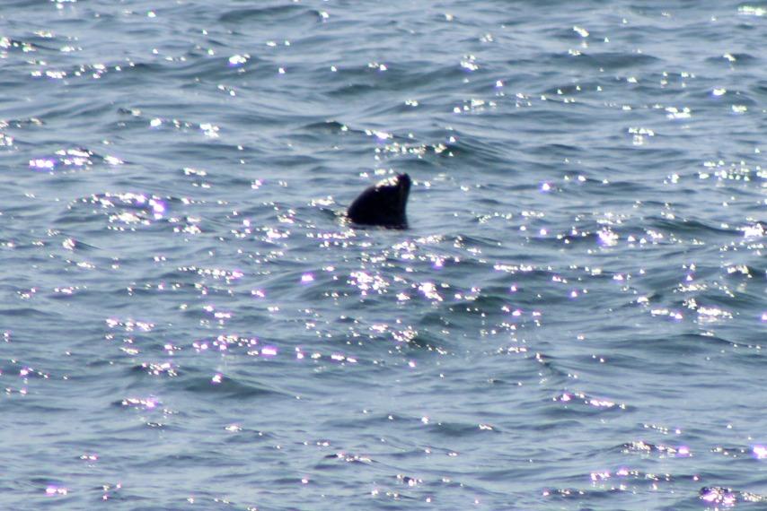 Lazily backstroking seal
