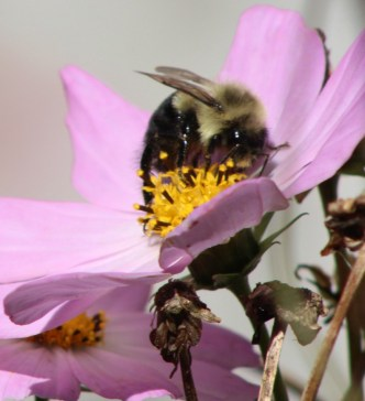 Bee16