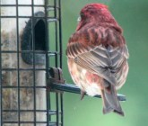 Bird1