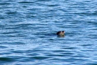 Seal19