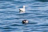 Seal24