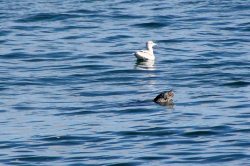 Seal32