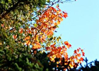 Fall33