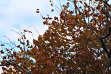 Leaves10