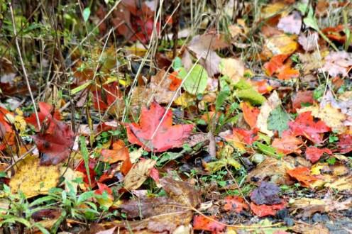 Leaves15