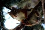 IMG_4789Squirrel