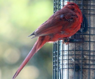 IMG_7244Red