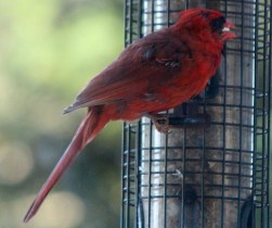 IMG_7245Red